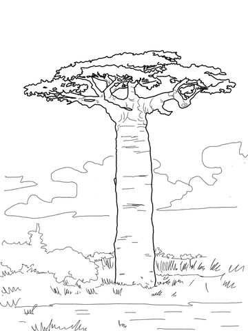 Africa Grandidier S Baobab Coloring Page Art Africain