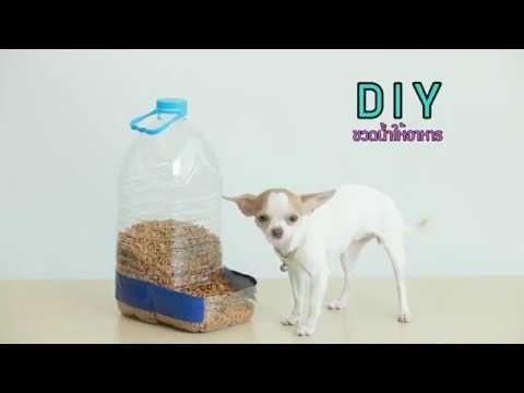 D I Y Dog Feeder ขวดน ำใสให อาหาร ทำง ายใน 5 นาท Youtube ท นอนส ตว เล ยง บ านหมา ไอเด ยงานฝ ม อ
