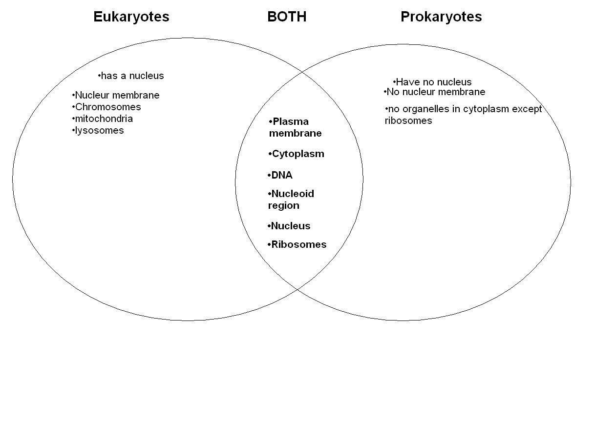 Prokaryote Vs Eukaryote Worksheet Prokaryotic Cell