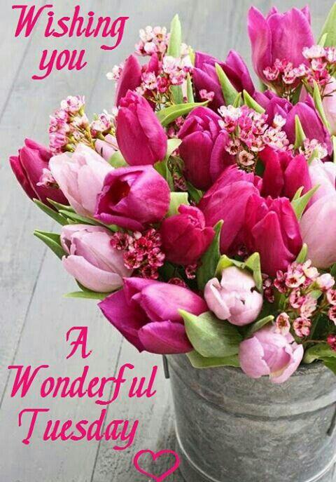 Bildergebnis für Happy Tuesday with Spring flowers