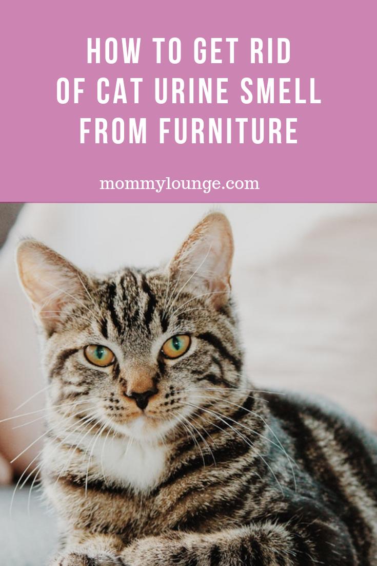 DIY Recipe How to Remove Cat Urine Smell Cat urine