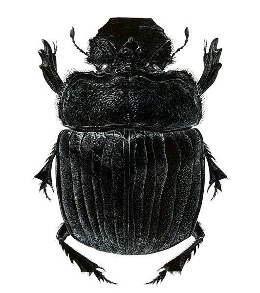 anatomy bug - Hľadať Googlom | bugs-chrobaky | Pinterest