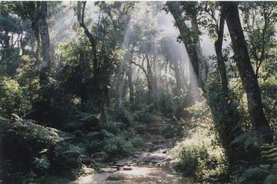 sandalwood forest | Kauai Brainstorm | Country roads, Kauai, Country