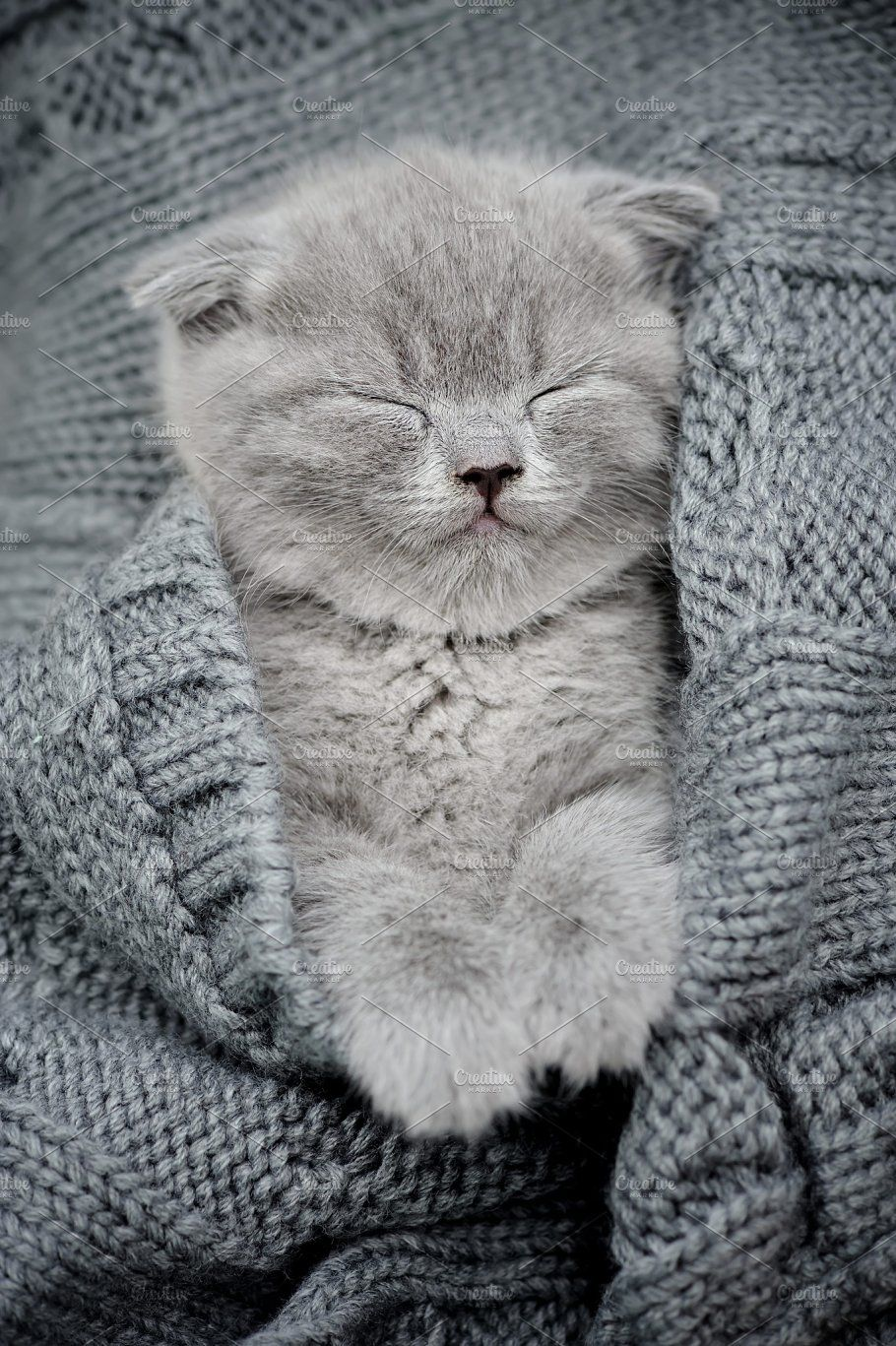 Cute little kitten by Byrdyak on creativemarket Cute