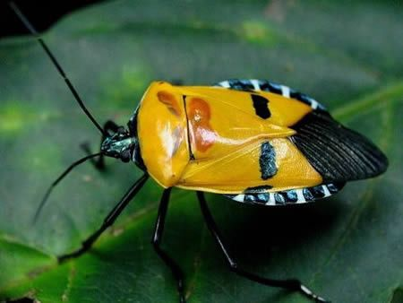 Animals With Human Faces A Stink Bug With Images Beautiful