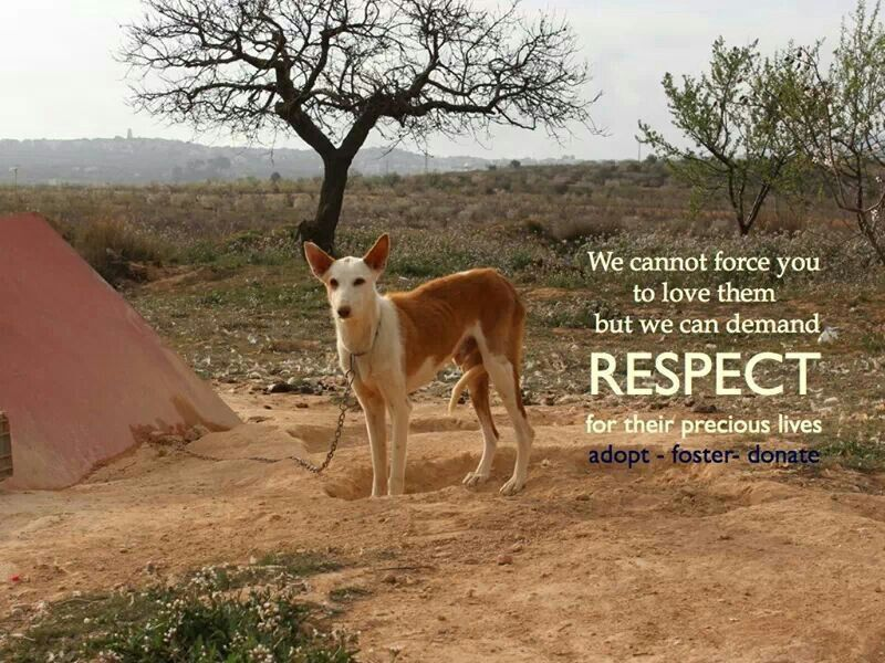 Respect! Adopt- Foster- Donate