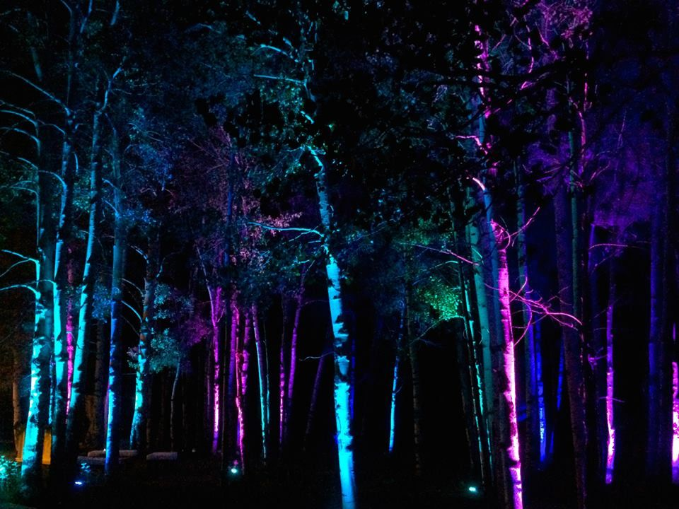 uplighting for the pine trees in red