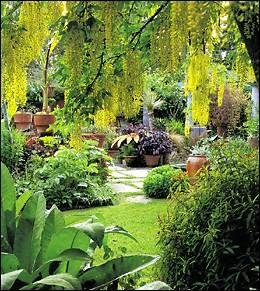 Lovely Dream Garden