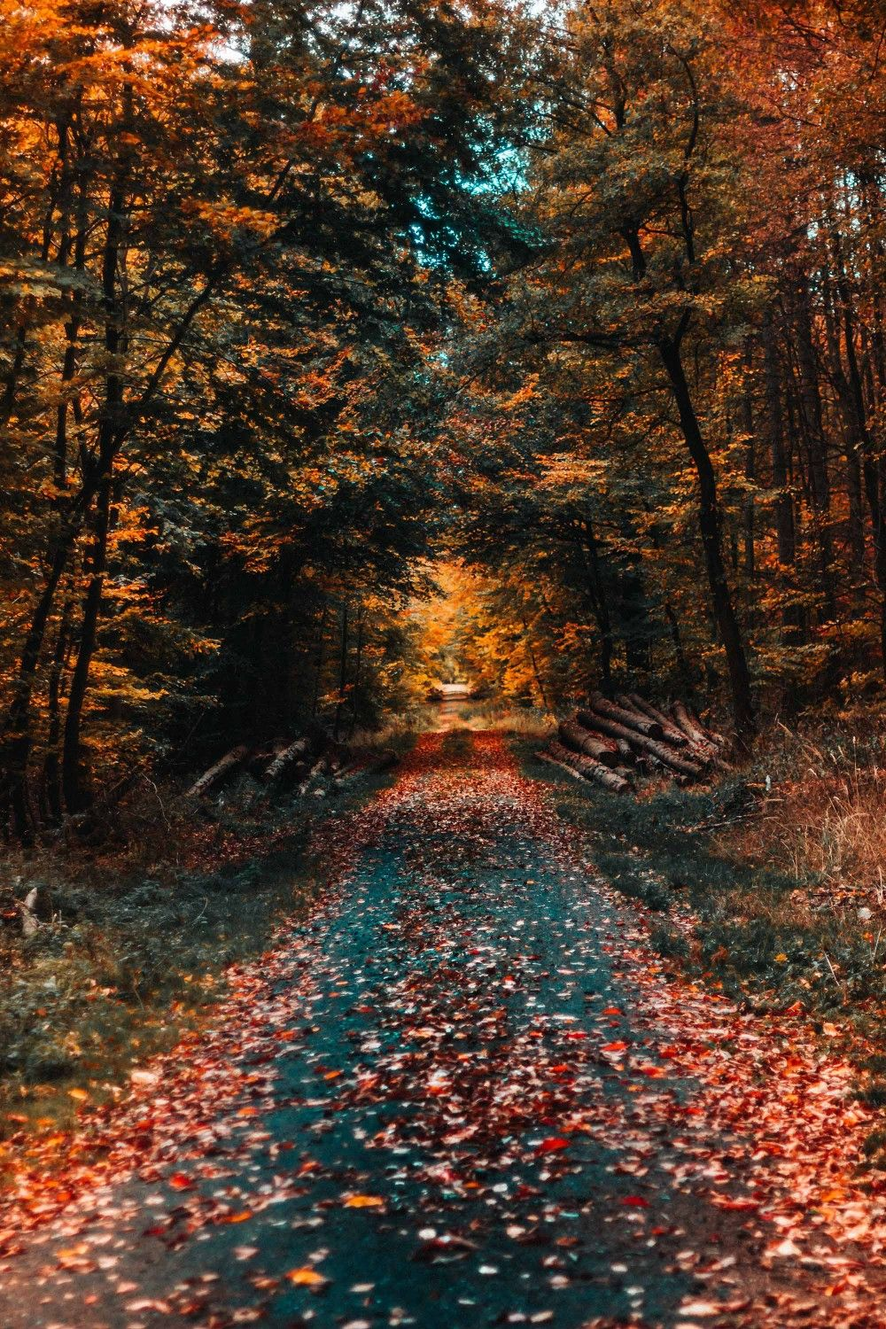 Autumn Road Wallpaper Android Wallpaper Iphone Wallpaper Hdwallpaper Best Wallpaper Pc Hd Fall Wallpaper Fall Wallpaper Tumblr Free Fall Wallpaper