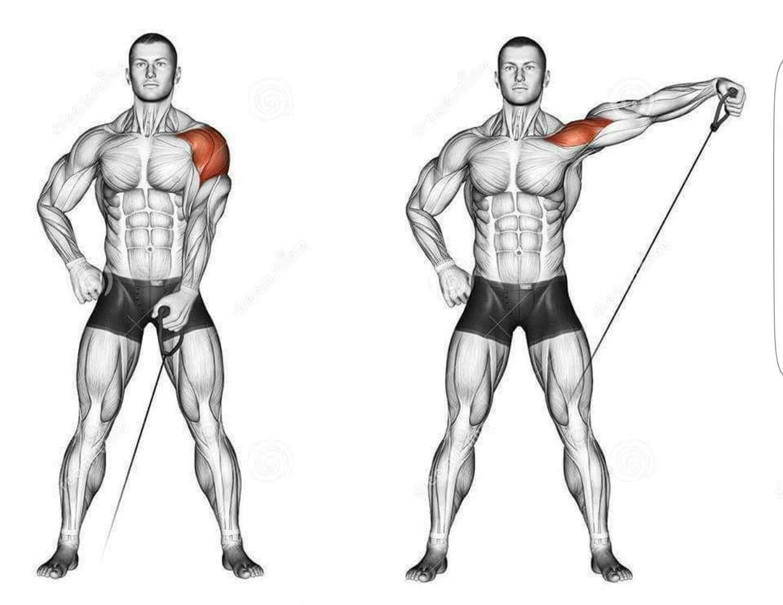Exercise for deltoids | Exercise Library | Pinterest | Exercises ...