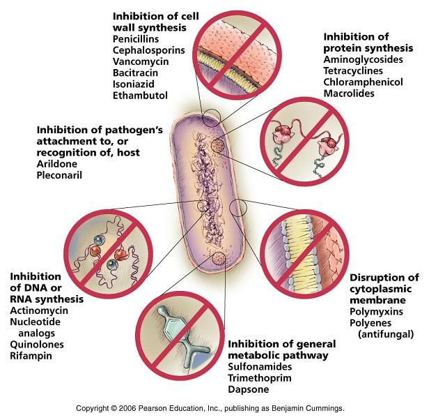 mode of action of antibiotics pdf