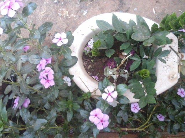 Área útil?  --Simmmmm!!! #vaso#planta#reutilizável#reutilizar#natureza#flor