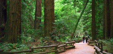 Muir Woods National Park. Golden Gate National Recreation Area. California. The beauty will bring you to tears.