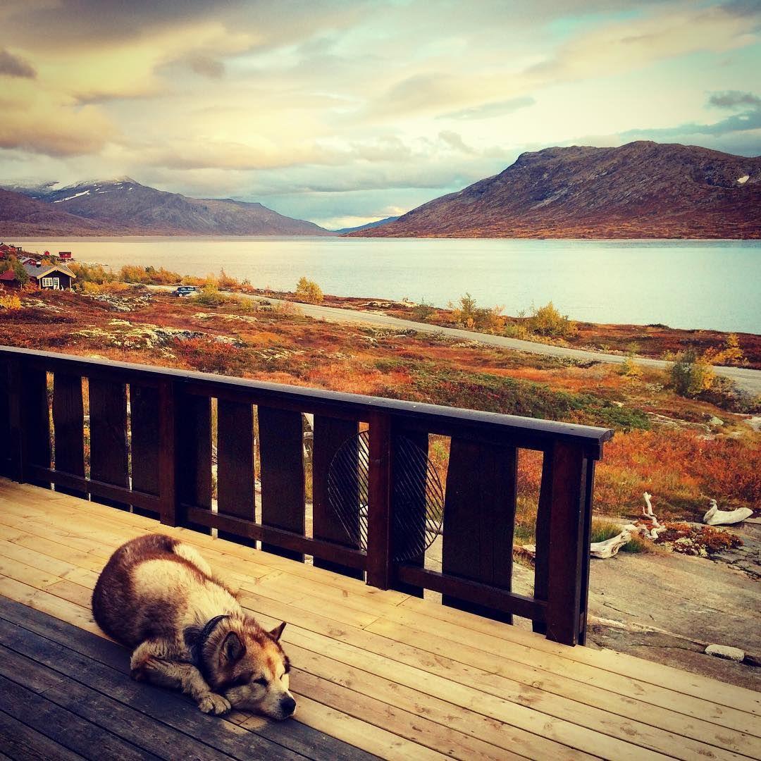 """""""Fleire enn oss som syns d va godt å komme på #hytta igjen☺️ #Aursjøen #123hytteinspirasjon #bladethytteliv #nrkmogr"""""""