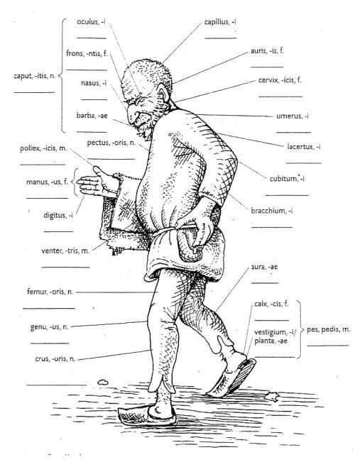 corpus humanum - Buscar con Google | Latine loqui | Pinterest | Latein