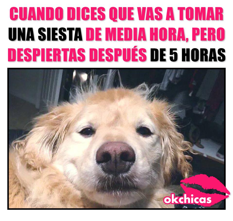 20 Divertidos Memes De Perros Que Te Haran Llorar De Risa Memes Perros Memes Divertidos Memes De Animales Divertidos