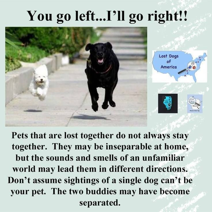 Pets That Are Lost Together Do Not Always Stay Together They May Be Inseparable At Home But The Sounds And Smells