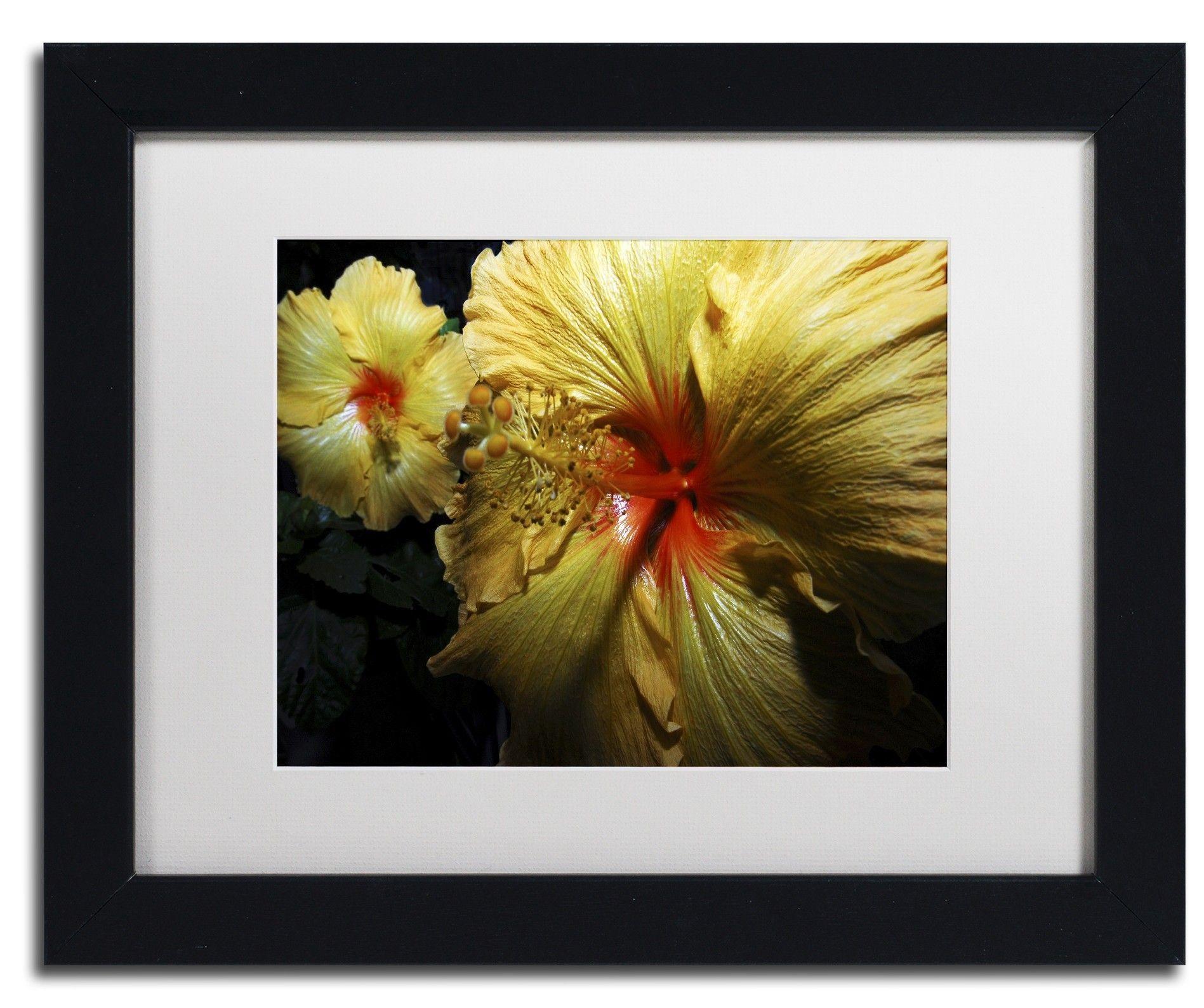 Sunburst Hibiscus by Kurt Shaffer Framed Photographic Print ...