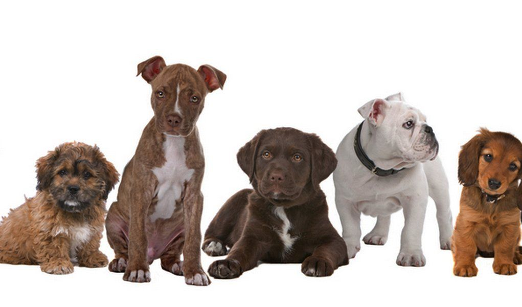 Best Dog Breed Quiz To Help You Choose Your Next Pup Top Tips
