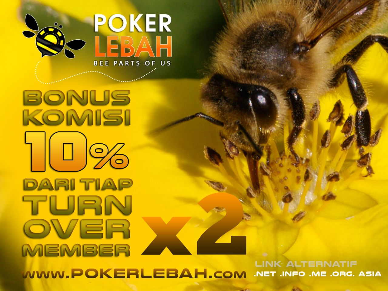 Pin On Pokerlebah