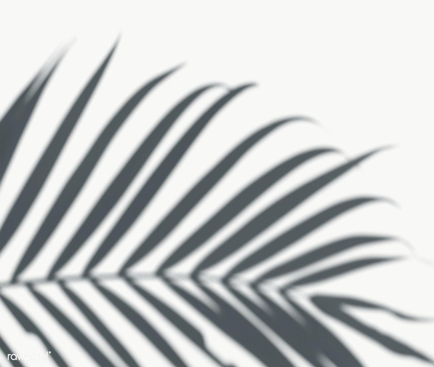 Shadow Of Palm Leaves On A White Wall Free Image By Rawpixel Com Ideias De Fotos Sombras De Janelas Fotos