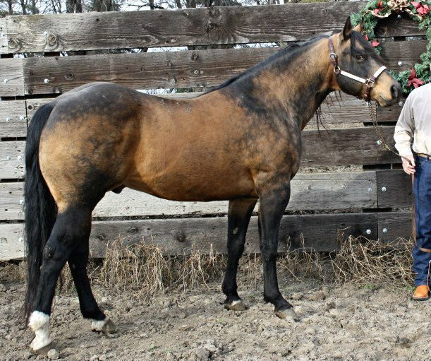 spanish horse breeds - Google Search