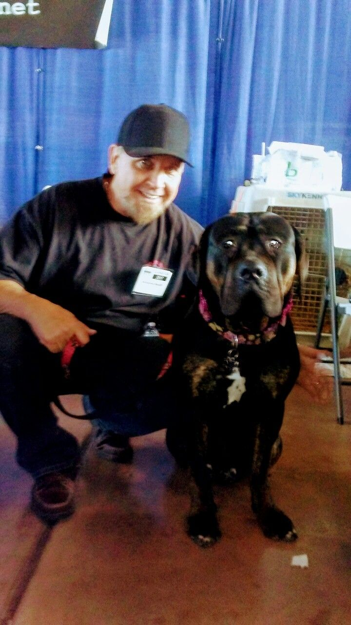 Park Art|My WordPress Blog_Great Dane Puppies For Sale In Austin Texas
