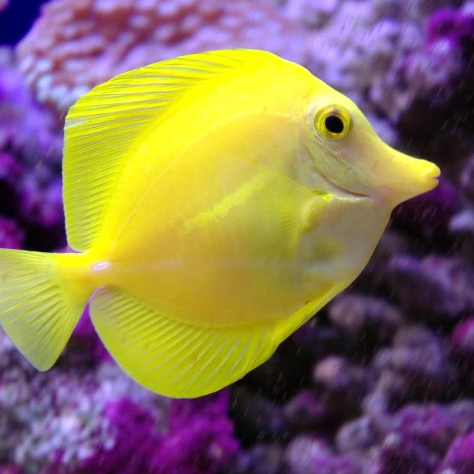 Five Saltwater Starter Fish For Beginners Marine Aquarium Fish Saltwater Fish Tanks Saltwater Aquarium Fish