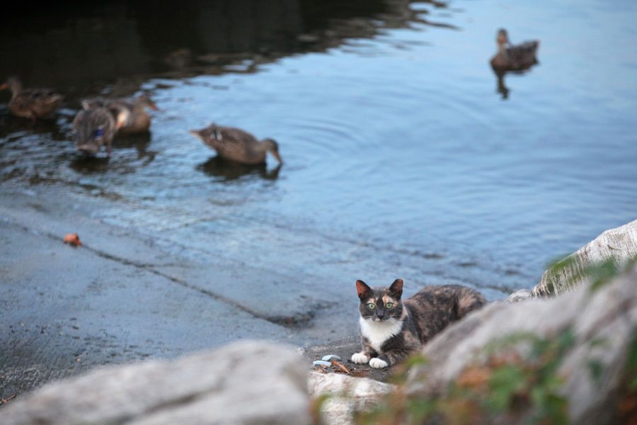 14 Myths and Facts About Feral Cats, And How You Can Help