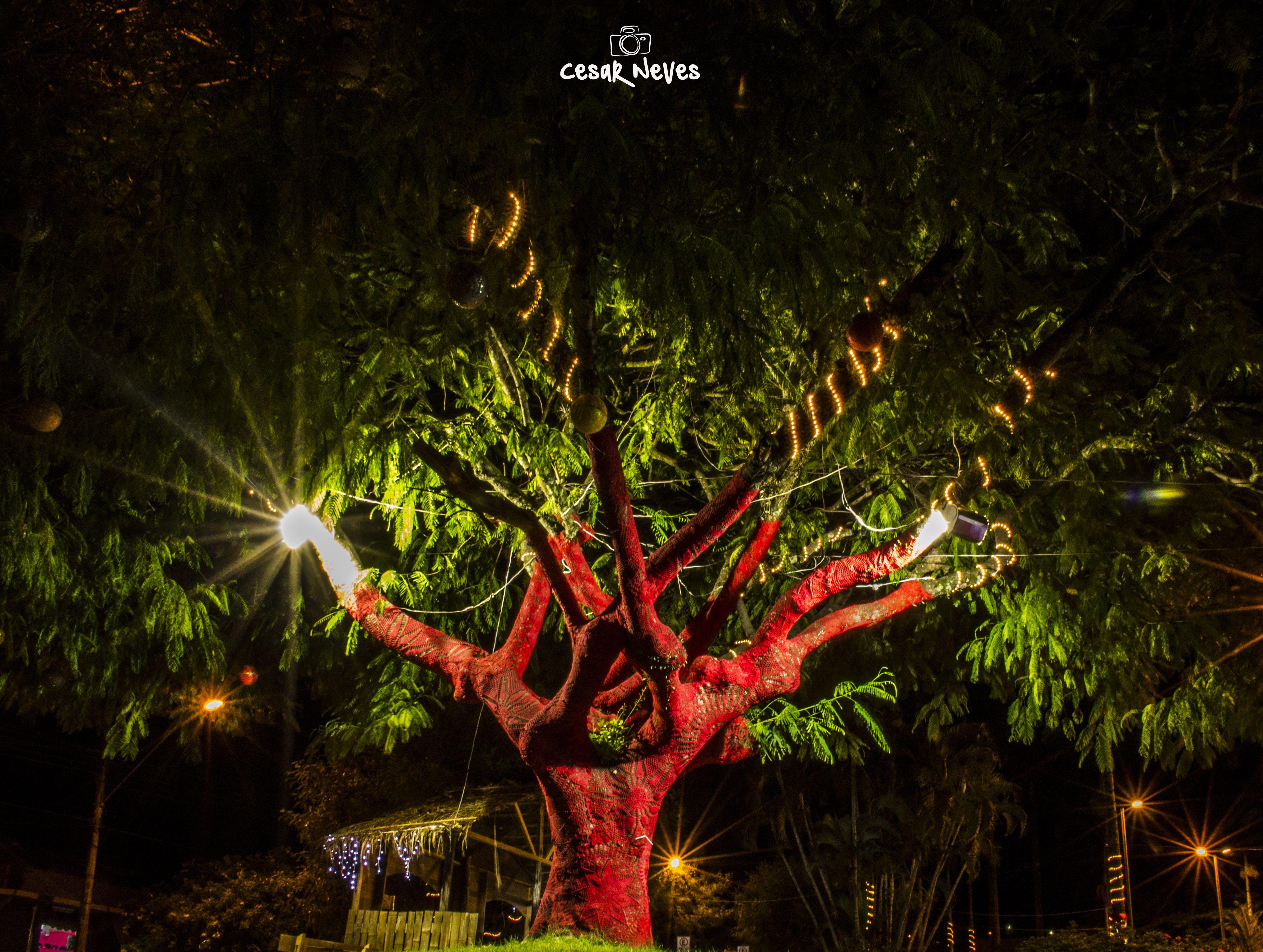 Arvores enfeitadas para as festas de final de ano em Inconfidentes - MG