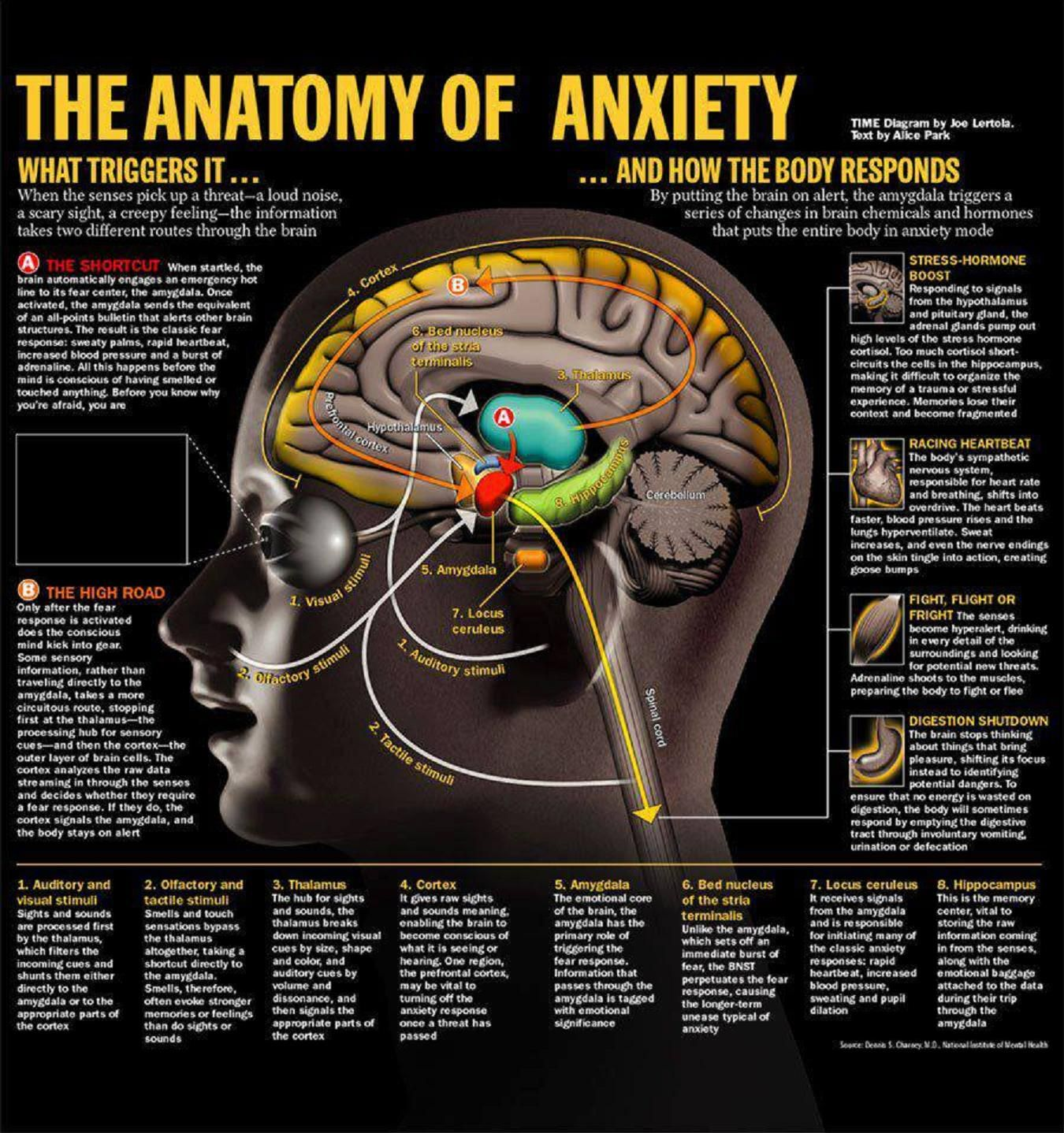 The Anatomy Of Anxiety Mental Health Pinterest Anatomy