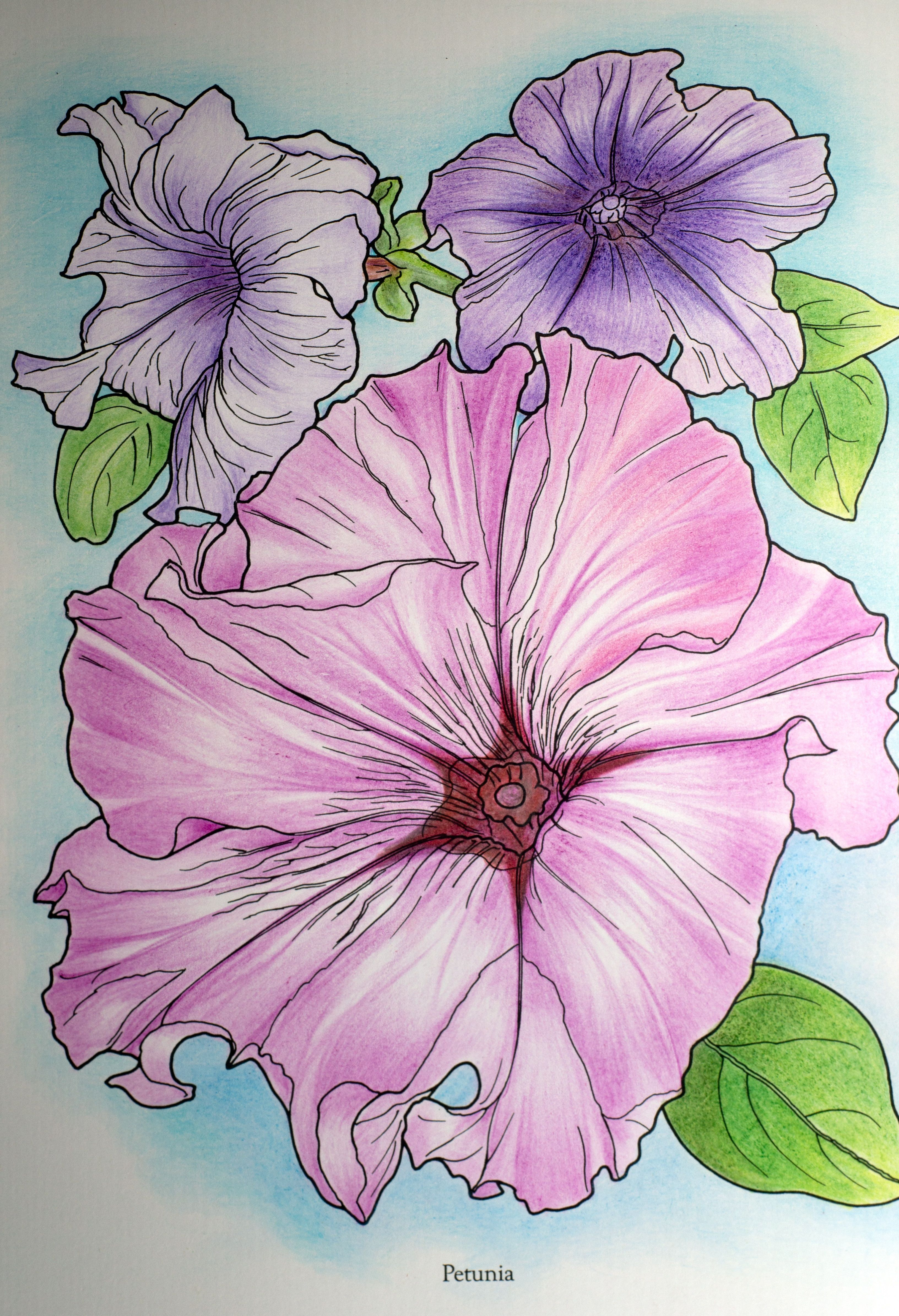 Lina 18 Division From In Full Bloom Coloring Book Flower Drawing Coloring Books Flower Art