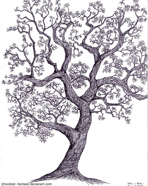 drawings - Tree Drawings
