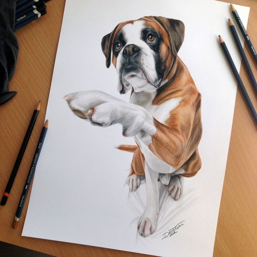 Dog Color Pencil Drawing By Atomiccircus Beautiful Cute