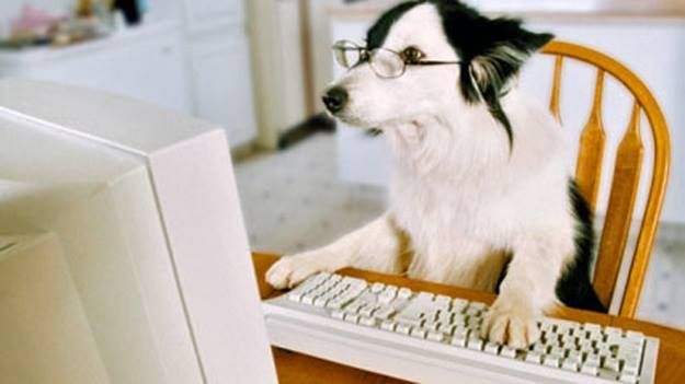 Image result for virtual meeting with dog