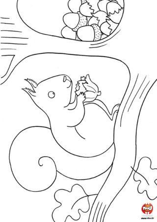 Coloriage l 39 ecureuil mange une noisette imprime vite ce - Dessin noisette ...