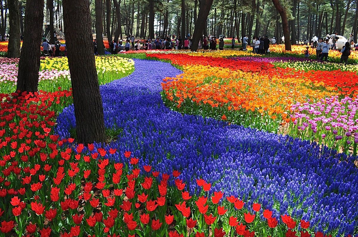 A Never Ending Ocean Of 45 Million Flowers In Japan Pinterest