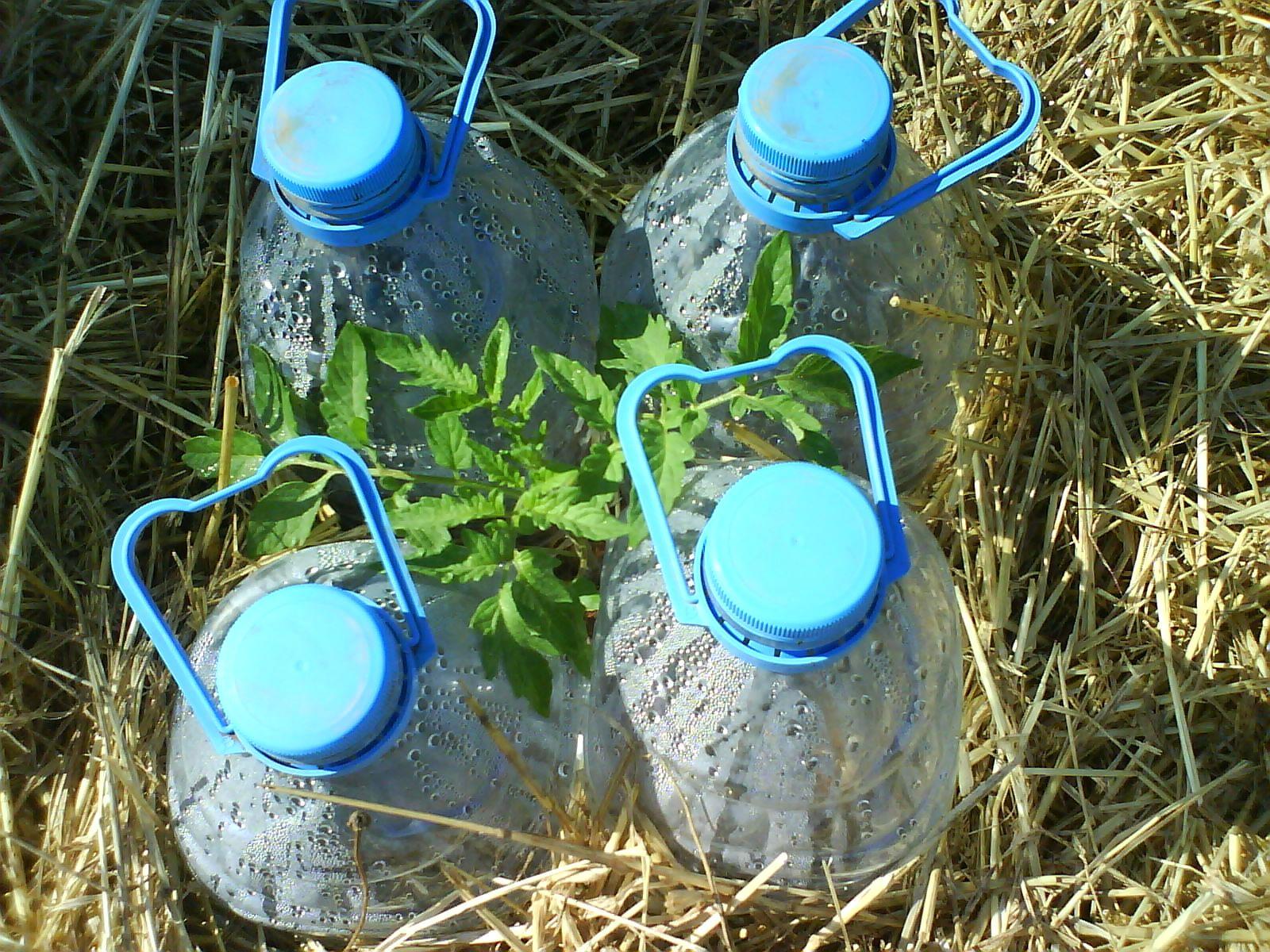 Tomatera riego por goteo con botellas educaci n for Riego automatico leroy merlin