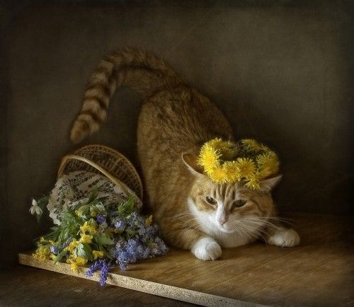 1X - The wreath of dandelions for Ginger Cats by Eleonora Grigorjeva