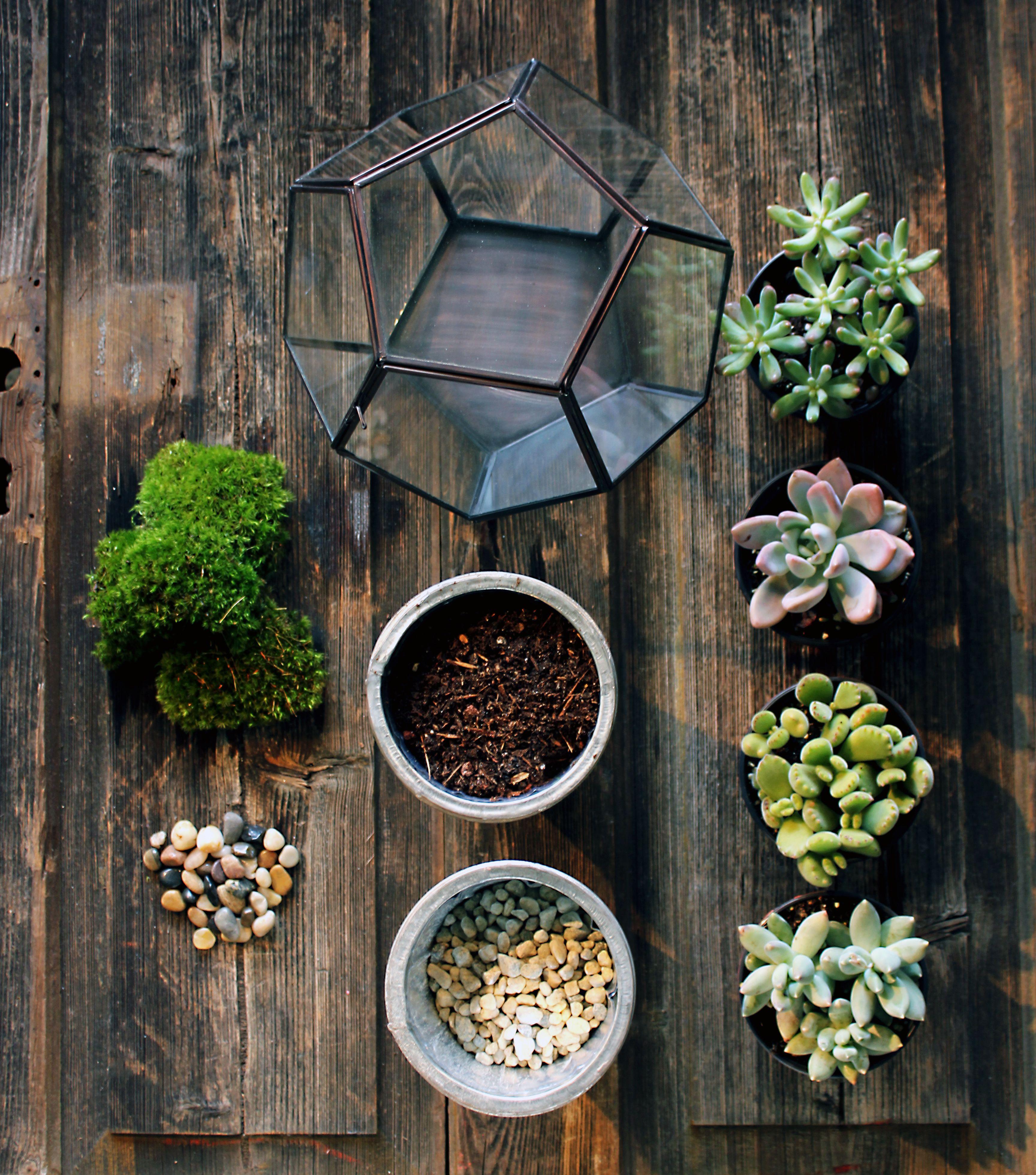 DIY - Create Your Own Terrarium