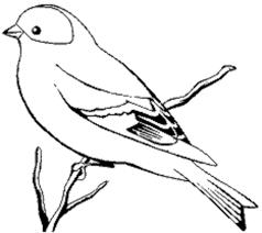 Resultado De Imagen Para Fotos De Hornero Para Colorear Pajaros Para Colorear Dibujos De Aves Dibujos De Pajaro