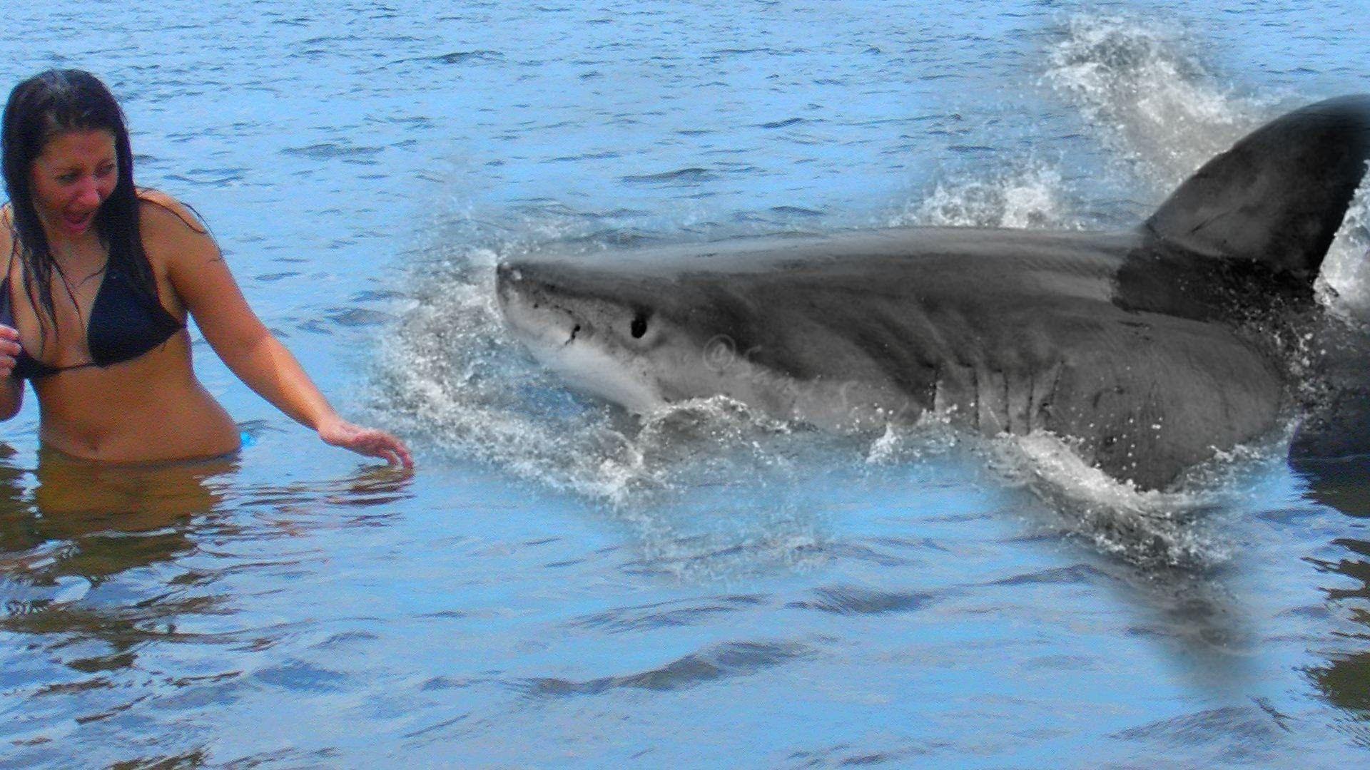 great white shark eating people videos wwwimgkidcom