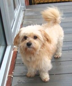 Best Friends In Atlanta Dog Adoption Animal Society Cat Help