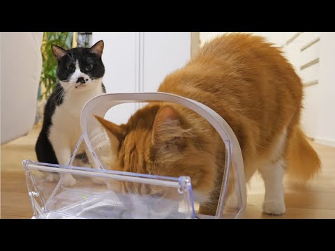 We got a microchip cat feeder for only Haku YouTube