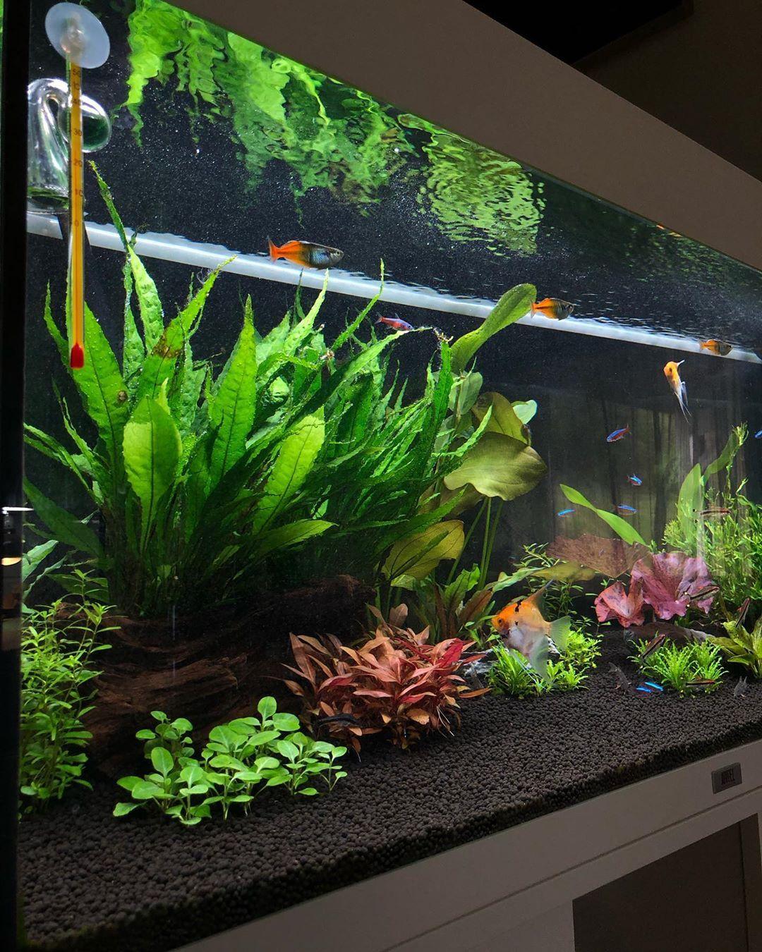 Keeping my water crystal clear | Fresh water fish tank ...