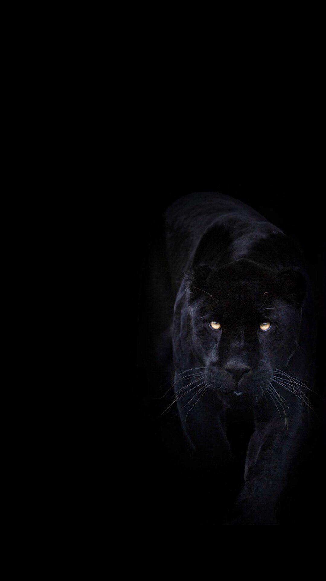 Обои Чёрная. Животные foto 6