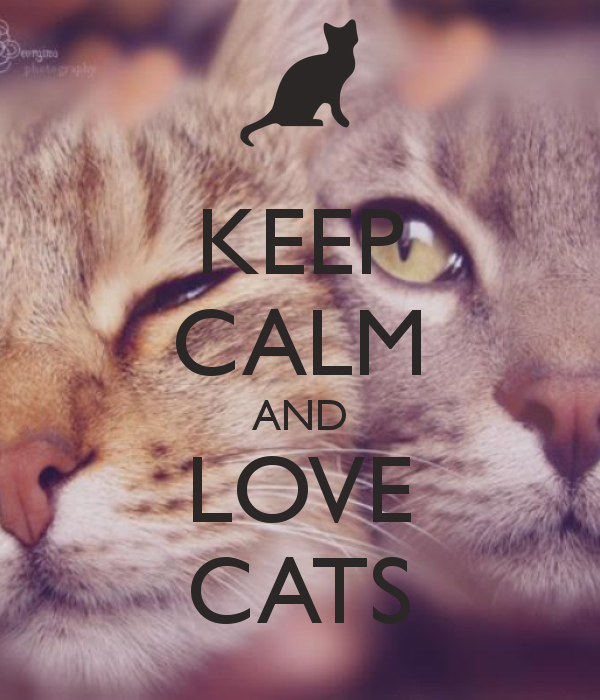♔ KEEP CALM AND LOVE CATS
