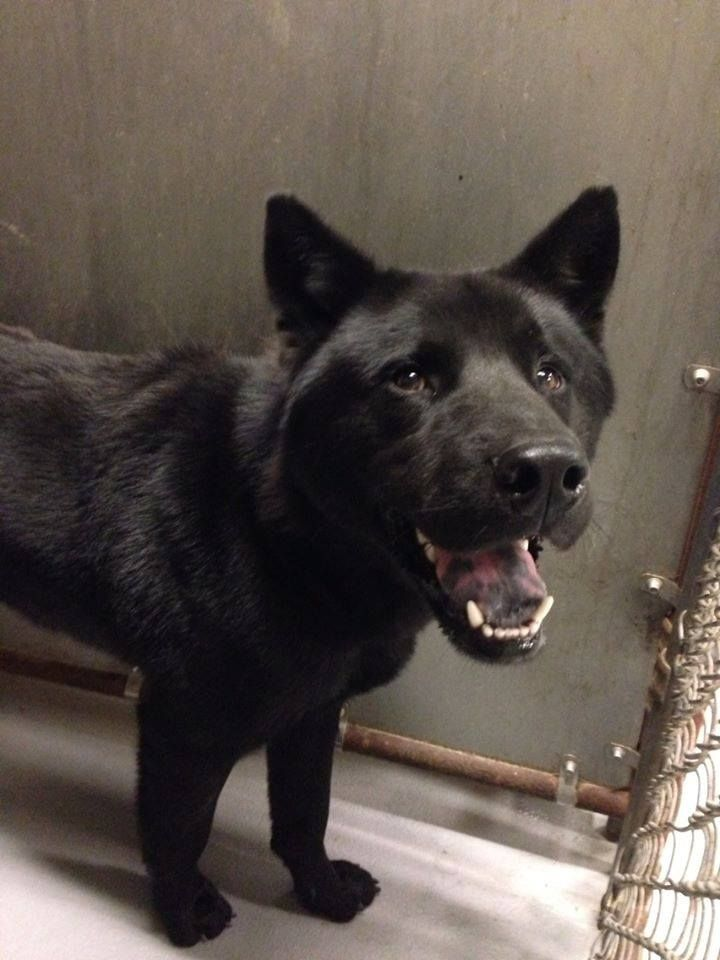 Adopt Mason On Rescue Dogs Humane Society Dogs