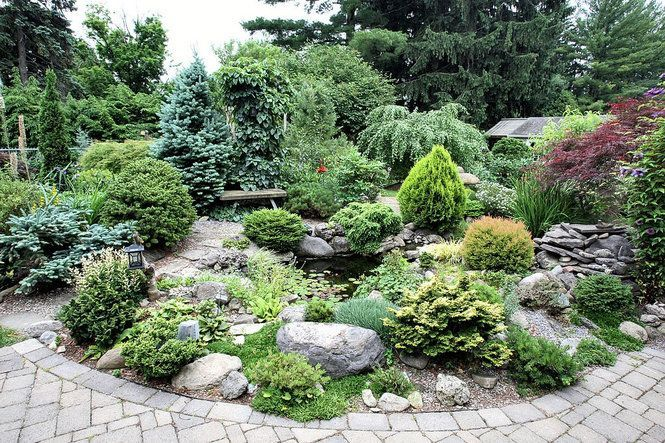 Conifer Garden Ideas find this pin and more on sawbridge garden Landscaping