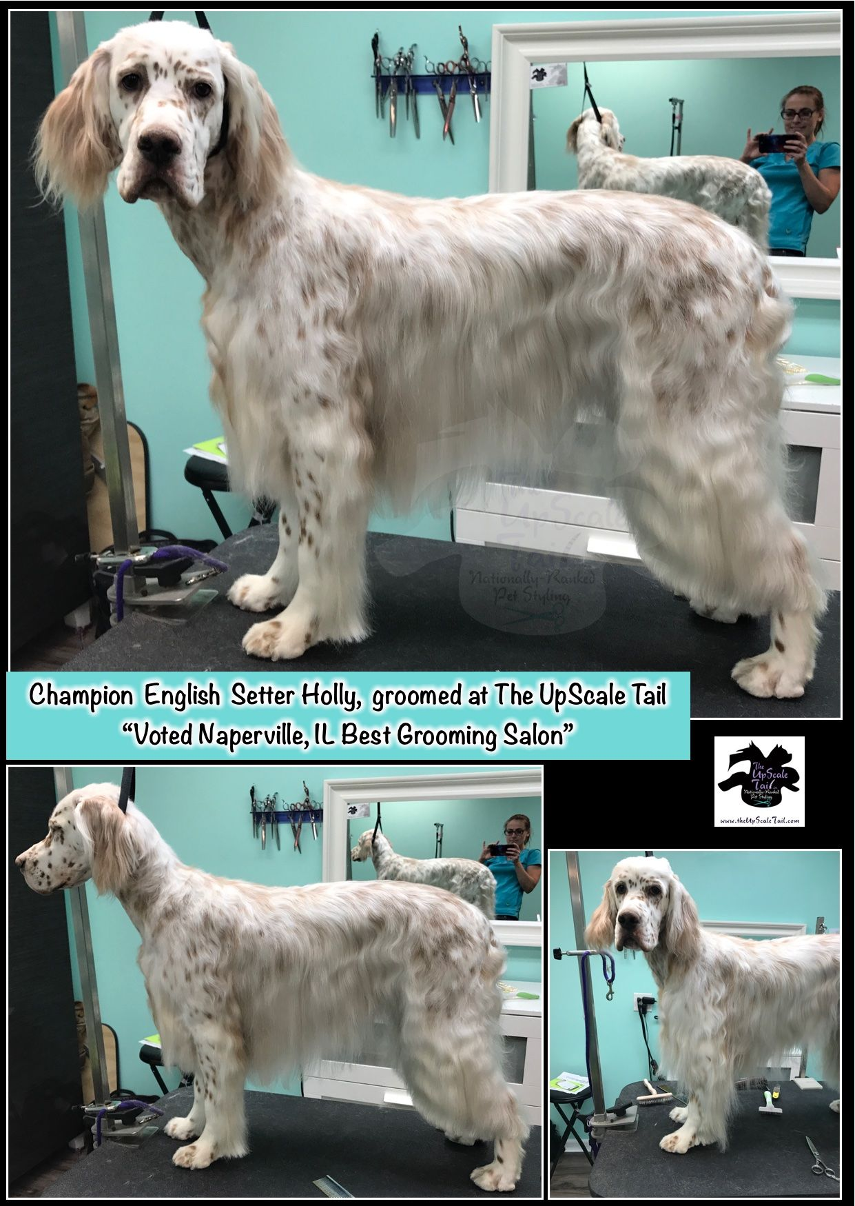 All Breed Show Dog And Rare Breed Grooming At The Upscale Tail Voted Naperville Il Pet Man Dog Pet Grooming Rare Dog Breeds